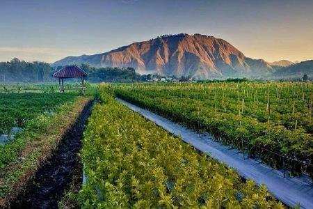 Desa Sembalun Destinasi Lombok